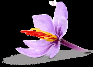 چقدر عصاره زعفران سراج مصرف کنیم8