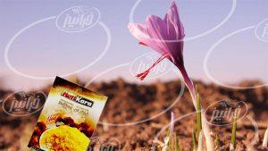 نمایندگی بزرگ عصاره زعفران هاتی کارا در کشور