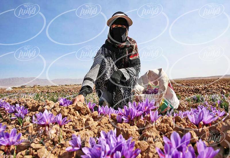 قیمت زعفران 50 گرمی در جنوب کشور