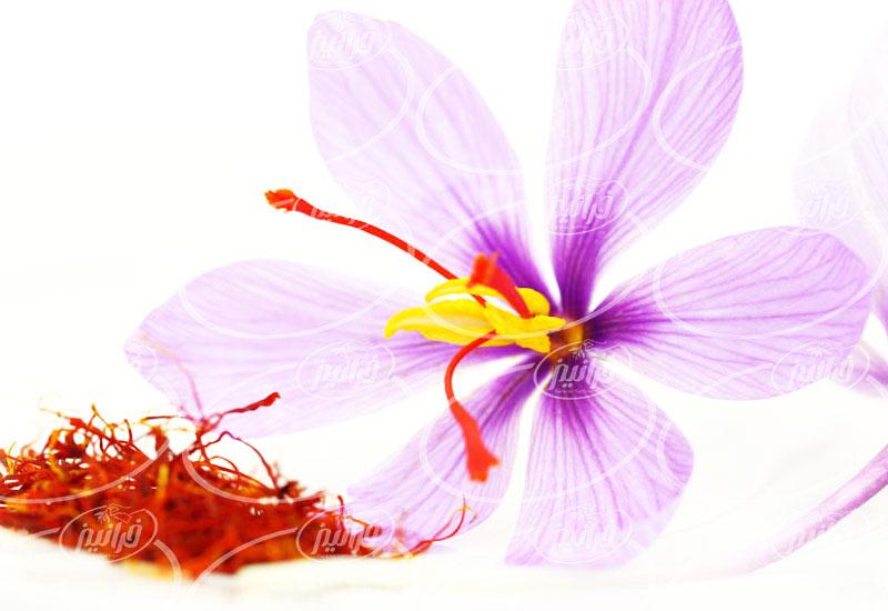 تولید رنگ خوراکی زعفران مخصوص رستوران ها
