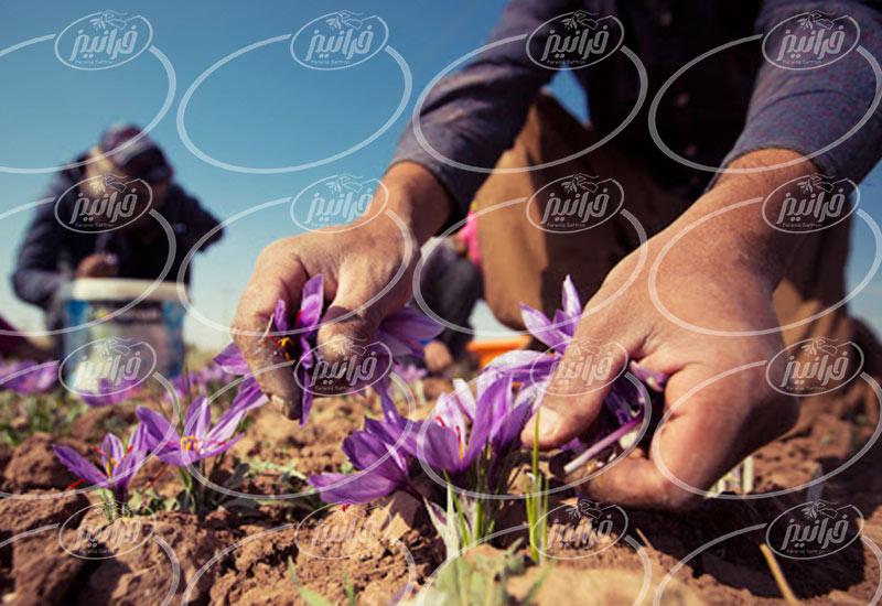 قیمت زعفران سرگل با بسته بندی ویژه