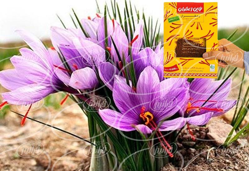 صادرات پودر زعفران نوین در بسته بندی ۲۰ عددی