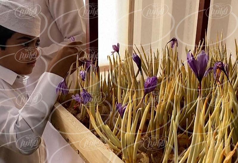 پیشنهادات عالی برای صادرات زعفران به المان