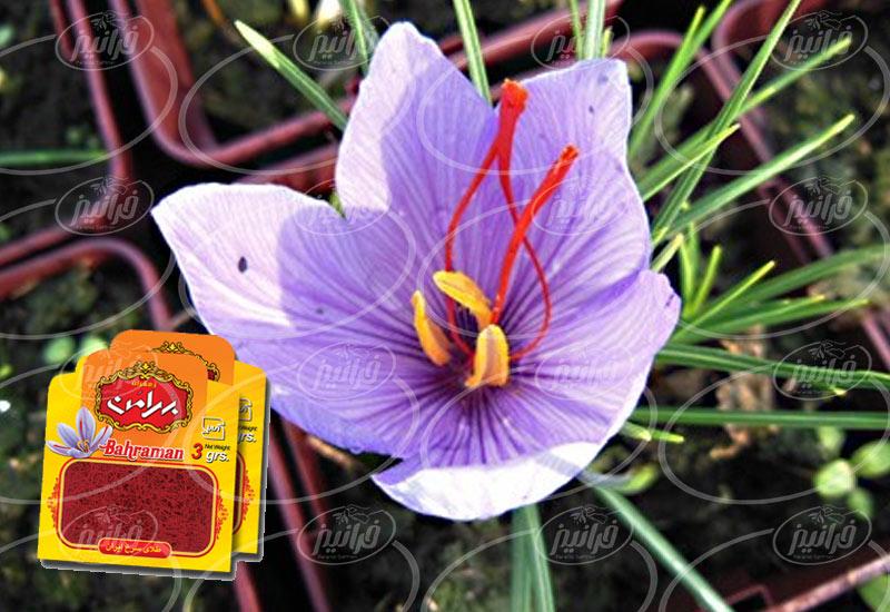کمترین قیمت زعفران ۳ گرمی بهرامن در ایران
